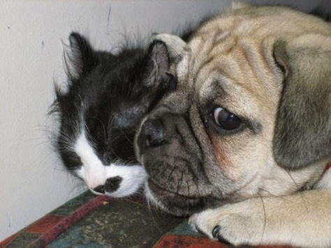funny-dog-cat-personal-space